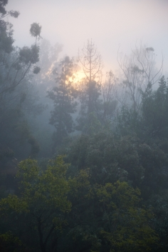 <h5>Morning in Franklin Canyon, Los Angeles</h5>